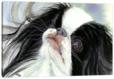 Chin Spin - Japanese Chin Canvas Art Print