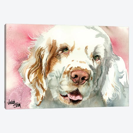 Clumber Slumber - Clumber Spaniel Canvas Print #JDI40} by Judith Stein Canvas Artwork