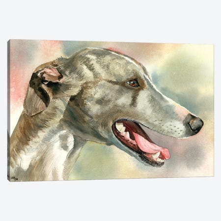 Cool Whipped - Whippet Canvas Print #JDI43} by Judith Stein Canvas Art