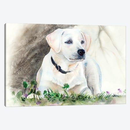 Delta Belle  Canvas Print #JDI49} by Judith Stein Canvas Art