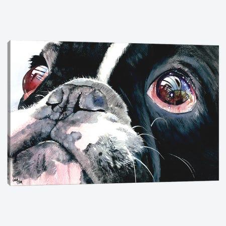 Eye See You - French Bulldog Canvas Print #JDI57} by Judith Stein Canvas Art