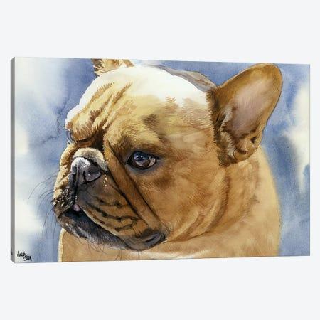 Fawn Frenchie - French Bulldog Canvas Print #JDI58} by Judith Stein Art Print