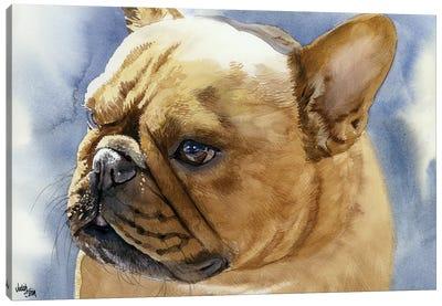 Fawn Frenchie - French Bulldog Canvas Art Print