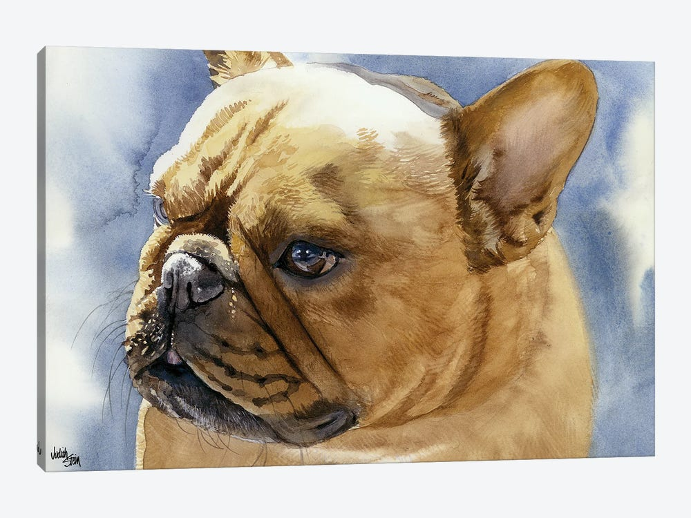 Fawn Frenchie - French Bulldog by Judith Stein 1-piece Canvas Wall Art