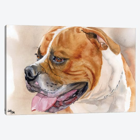 All American - American Bulldog - Red & White Canvas Print #JDI5} by Judith Stein Art Print