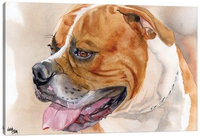 All American - American Bulldog - Red & White Canvas Art Print