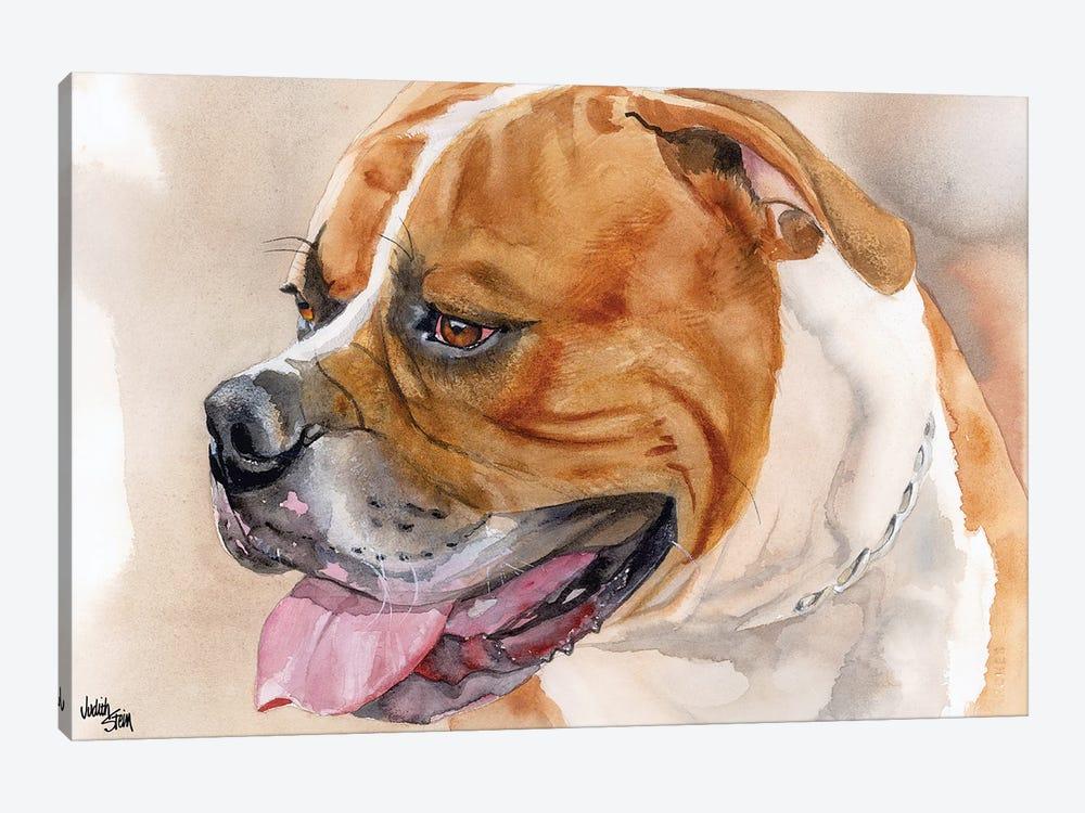 All American - American Bulldog - Red & White by Judith Stein 1-piece Canvas Art Print