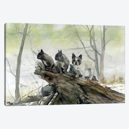 Frenchies in the Mist Canvas Print #JDI62} by Judith Stein Canvas Wall Art