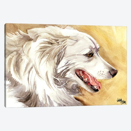 American Eskimo Dog Canvas Print #JDI6} by Judith Stein Canvas Print
