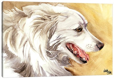 American Eskimo Dog Canvas Art Print