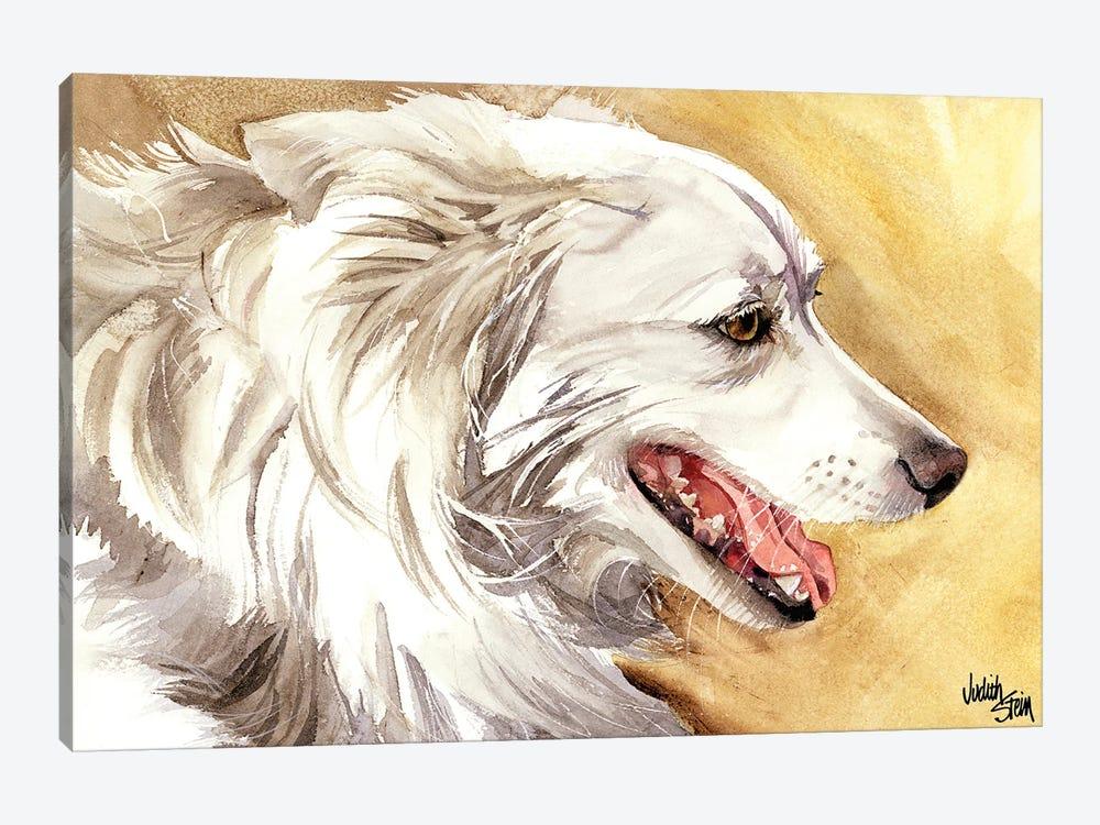 American Eskimo Dog by Judith Stein 1-piece Canvas Art