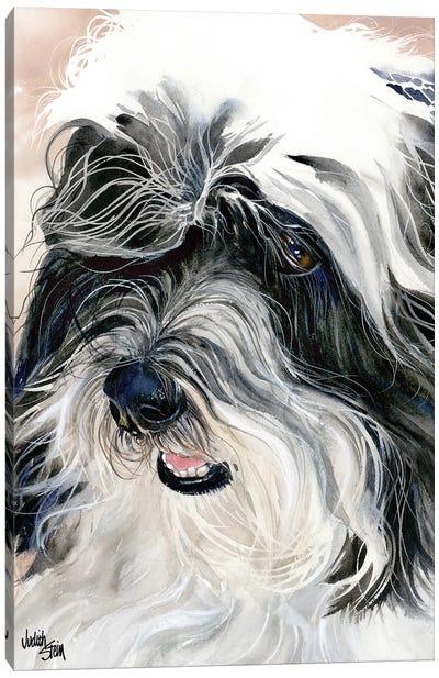 Havana Silk Dog - Havanese Canvas Art Print