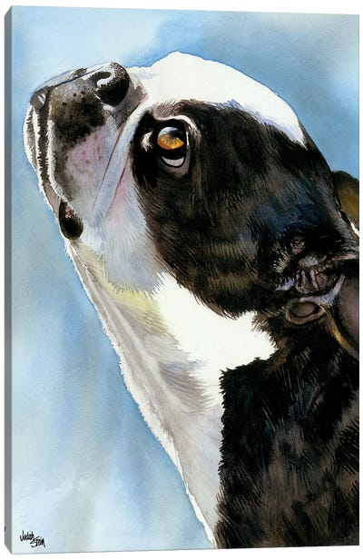 Here's Looking at You - Boston Terrier Canvas Art Print