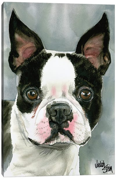 American Gentleman - Boston Terrier Canvas Art Print