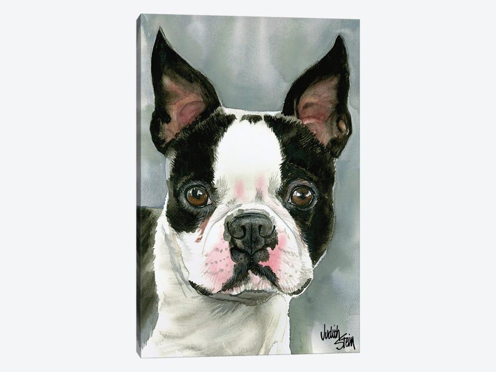 American Gentleman - Boston Terrier by Judith Stein 1-piece Canvas Print