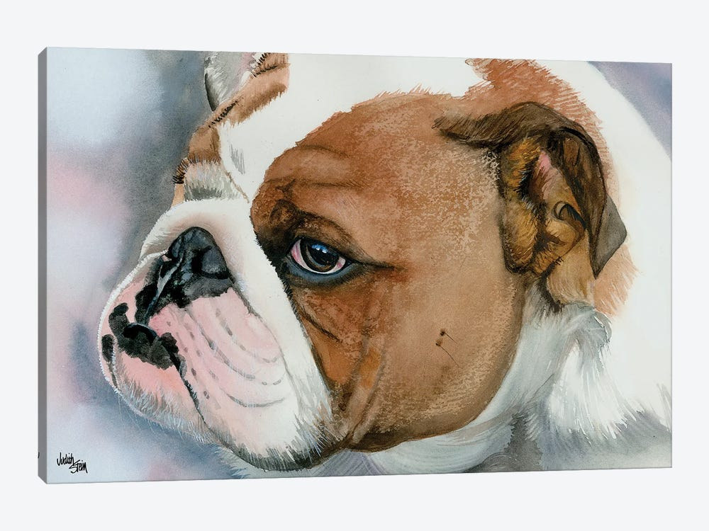 Hey Bulldog - English Bulldog by Judith Stein 1-piece Art Print