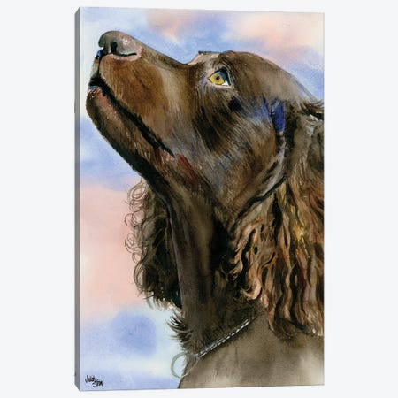 I Love a Mystery - American Water Spaniel Canvas Print #JDI83} by Judith Stein Canvas Art
