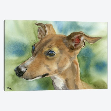 Iggy Pop - Italian Greyhound 3-Piece Canvas #JDI85} by Judith Stein Art Print