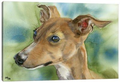 Iggy Pop - Italian Greyhound Canvas Art Print