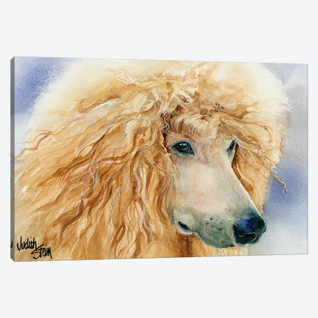 Apricot Angel - Apricot Standard Poodle Canvas Print #JDI9} by Judith Stein Canvas Art