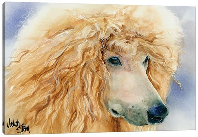 Apricot Angel - Apricot Standard Poodle Canvas Art Print
