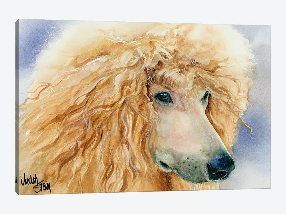 Apricot Angel - Apricot Standard Poodle by Judith Stein 1-piece Canvas Art Print