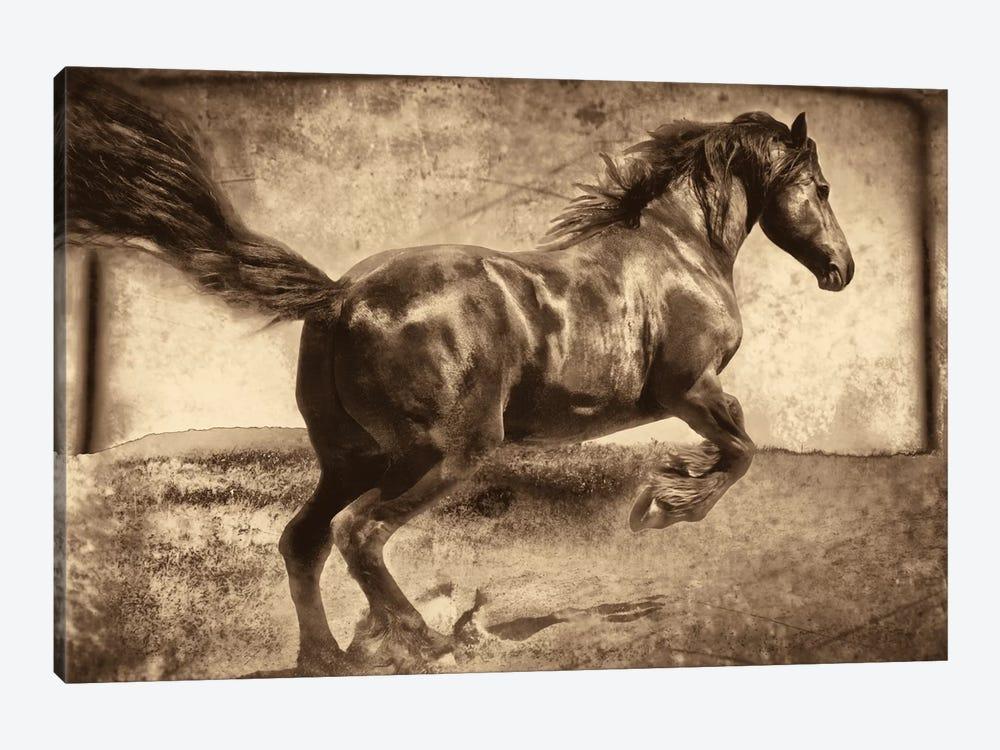 Free Spirit by Jennifer Broussard 1-piece Canvas Print