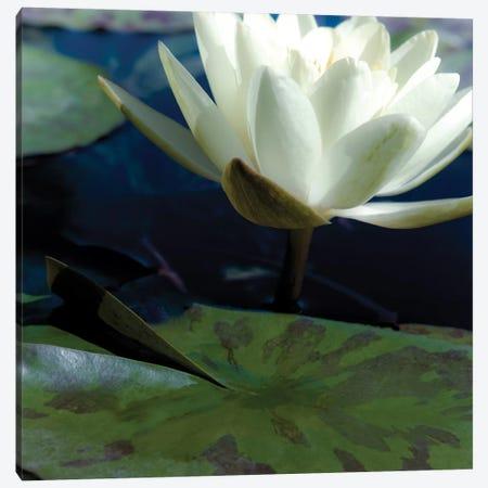 Water Lilies II Canvas Print #JEB5} by Jennifer Broussard Art Print