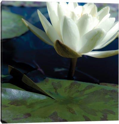 Water Lilies II Canvas Art Print