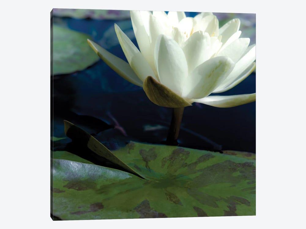 Water Lilies II by Jennifer Broussard 1-piece Canvas Art Print