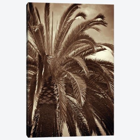 Whispering Palm Canvas Print #JEB6} by Jennifer Broussard Canvas Art Print