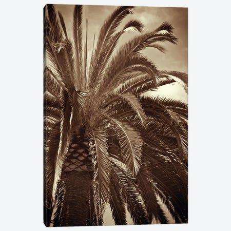 Whispering Palm Canvas Print #JEB6} by Jennifer Broussard Canvas Art Print