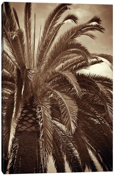 Whispering Palm Canvas Art Print