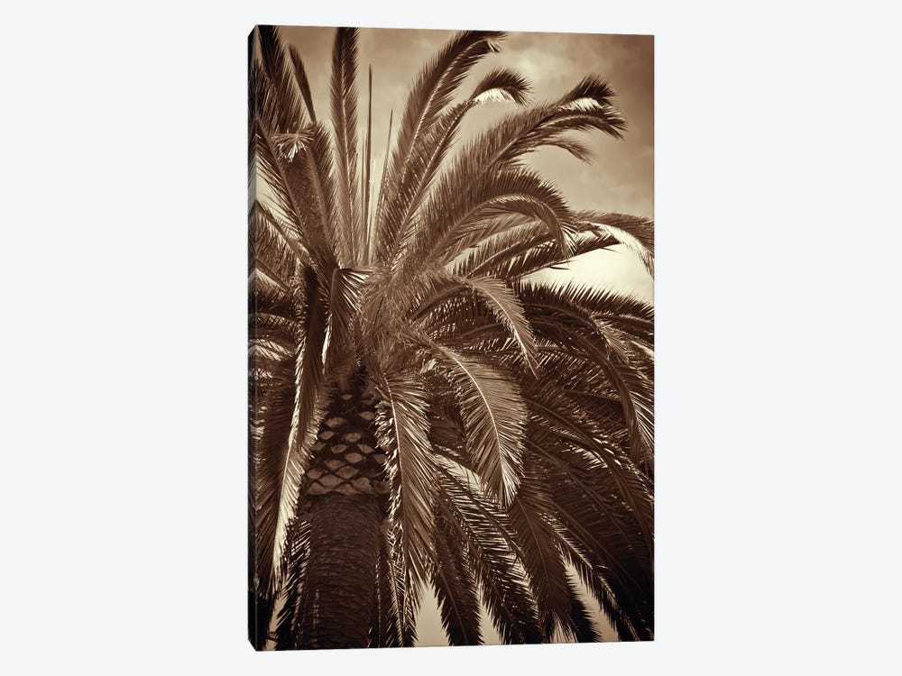 Whispering Palm 1-piece Canvas Art
