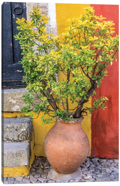 Portugal, Obidos. Potted plant in front of colorful entrance to a home in the hill town of Obidos. Canvas Art Print
