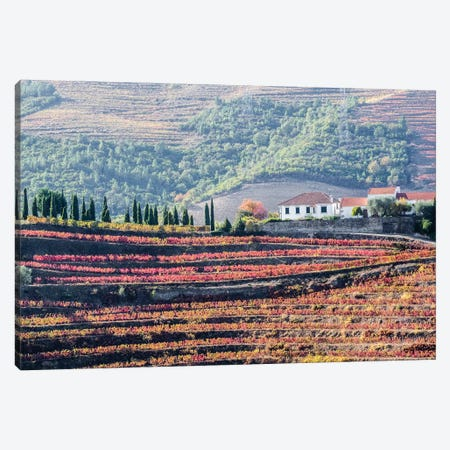 Portugal, Douro Valley. A home above the vineyards on terraced hillsides above the Douro River. Canvas Print #JEG26} by Julie Eggers Canvas Art