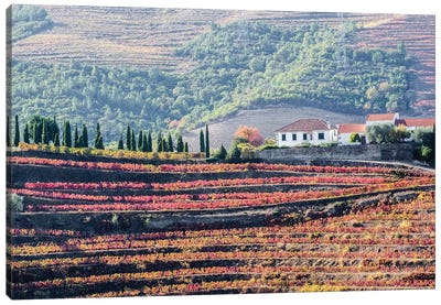 Portugal, Douro Valley. A home above the vineyards on terraced hillsides above the Douro River. Canvas Art Print