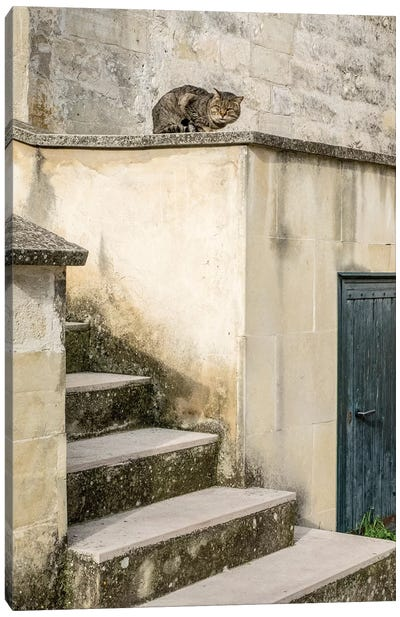 Cats Roaming The Cave Dwelling Town Of Matera. Canvas Art Print