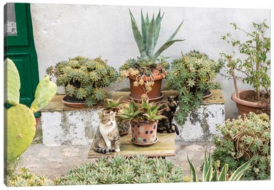 Plants Adorn The Outside Walls Of The Sassi Houses. Canvas Art Print