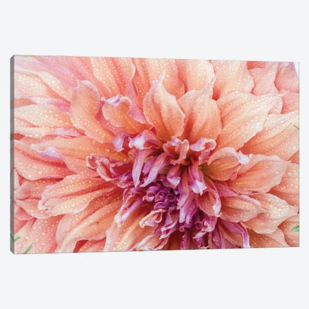 USA, Oregon, Canby, Clackamas County. Macro of a dahlia variety. Canvas Print #JEG45} by Julie Eggers Canvas Wall Art