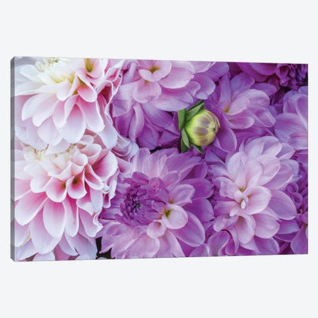 USA, Oregon, Canby, Clackamas County. Flower pattern with large group of lavender flowers. Canvas Print #JEG51} by Julie Eggers Canvas Artwork