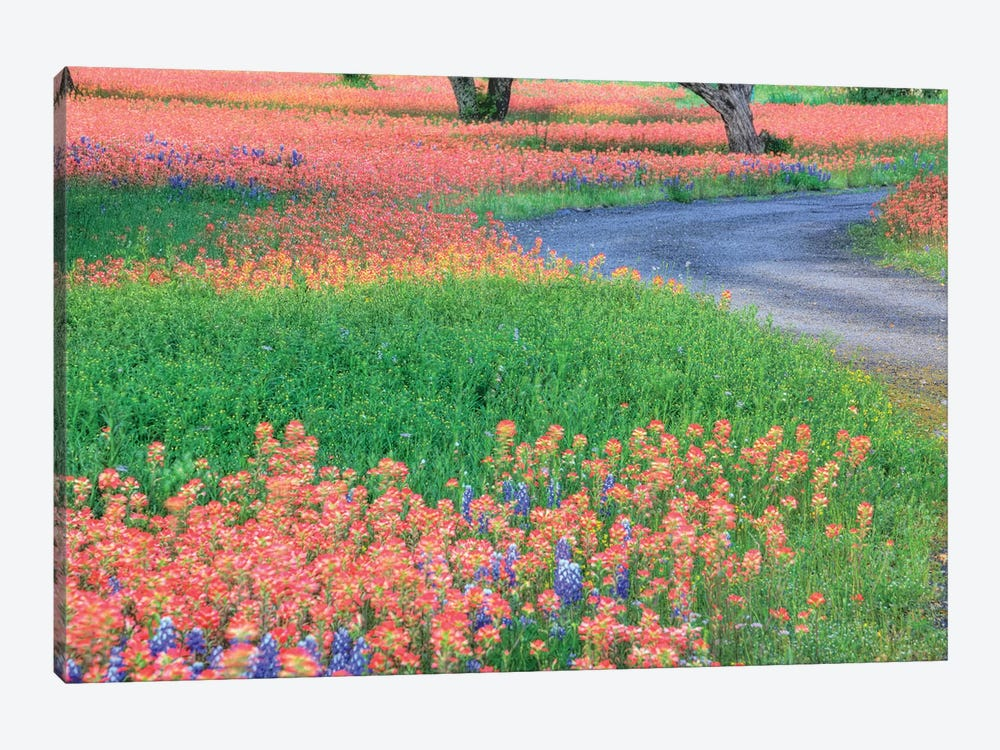 Field Of Bluebonnets And Scarlet Indian Paintbrushes, Texas Hill Country, Texas, USA by Julie Eggers 1-piece Canvas Art Print