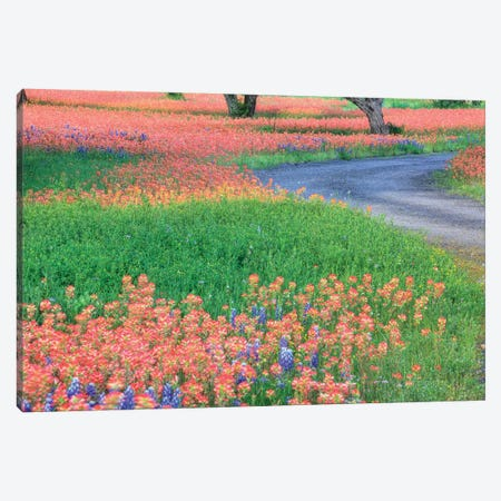 Field Of Bluebonnets And Scarlet Indian Paintbrushes, Texas Hill Country, Texas, USA Canvas Print #JEG6} by Julie Eggers Canvas Wall Art