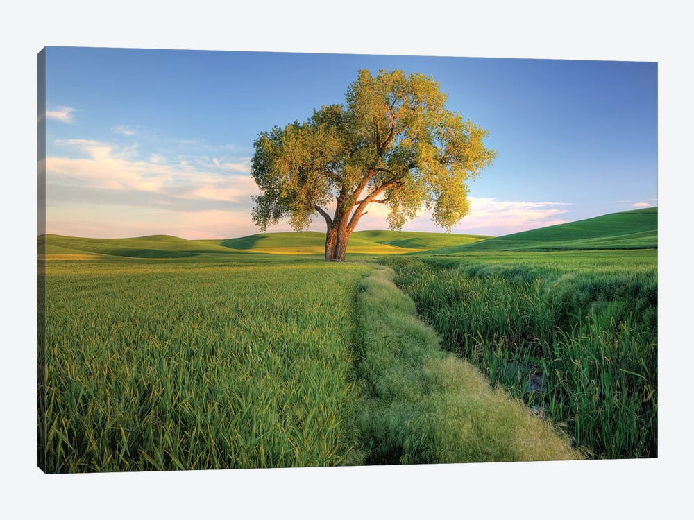Lone Tree In A Field, Palouse, Washington, USA by Julie Eggers 1-piece Canvas Art