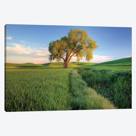 Lone Tree In A Field, Palouse, Washington, USA 3-Piece Canvas #JEG7} by Julie Eggers Canvas Wall Art