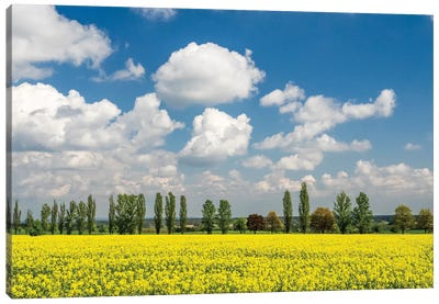 Czech Republic. Canola field and tree line. Canvas Art Print