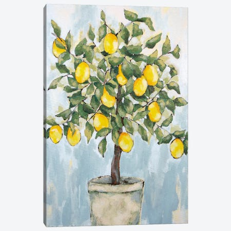 Lovely Lemons   Canvas Print #JEH17} by Jennifer Holden Canvas Wall Art