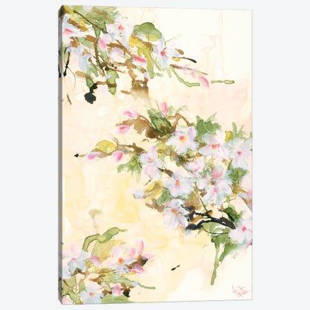 Cherry Blossoms Canvas Print #JEH26} by Jennifer Holden Art Print