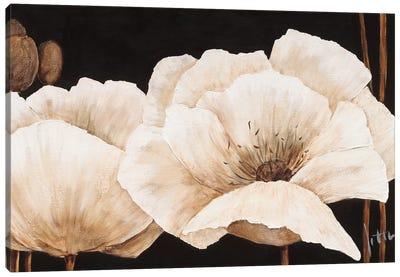 Amazing Poppies IV Canvas Art Print