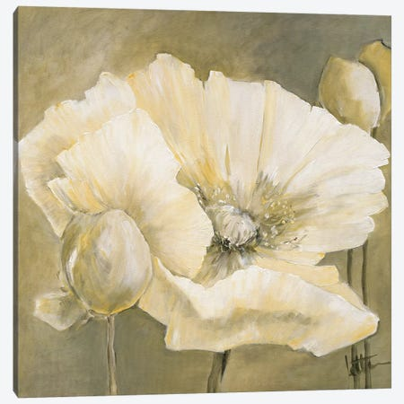 Poppy In White II Canvas Print #JET19} by Jettie Roseboom Art Print